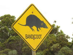 bandicoot-road-sign