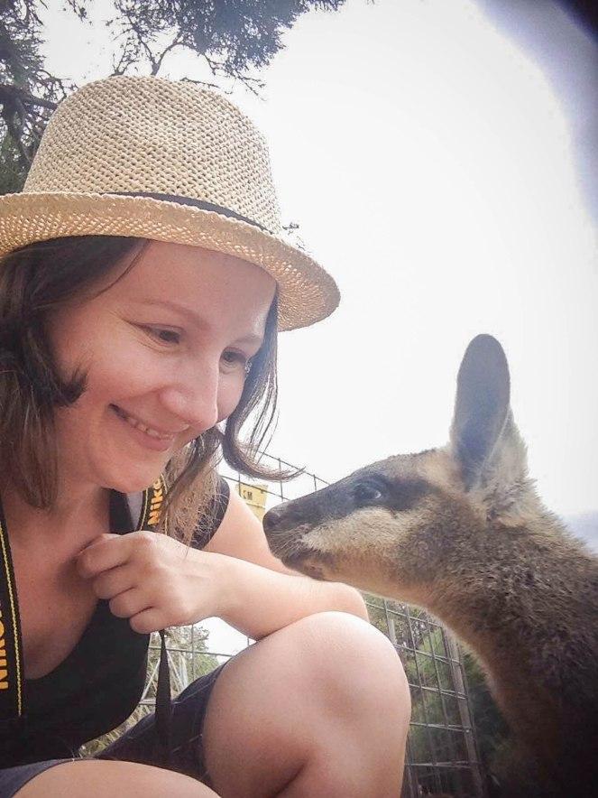 wallaby (1)