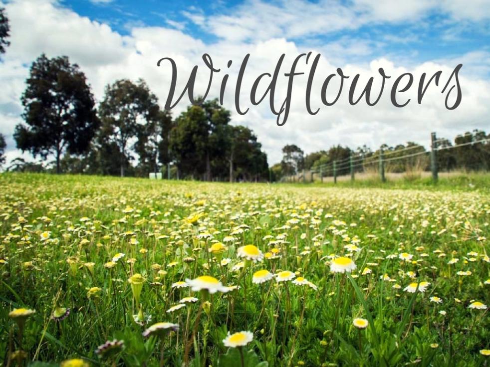 Kwiaty Zachodniej Australii