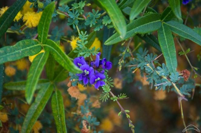 Wildflowers-14