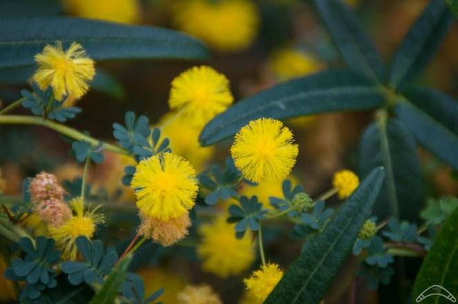 Wildflowers-15