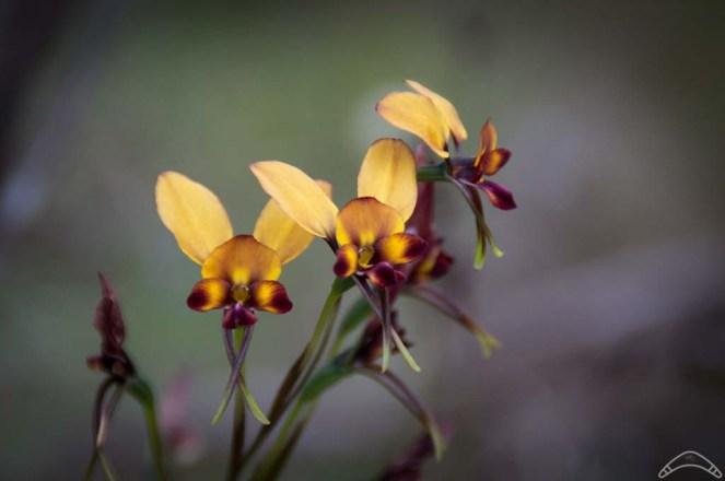 Wildflowers-16
