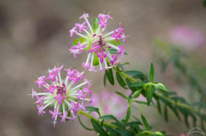 Wildflowers-19