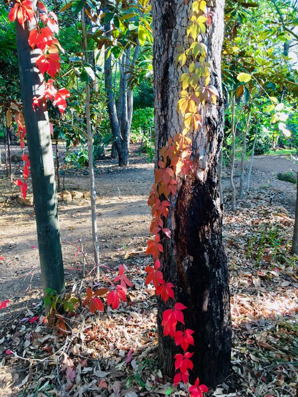 Perth Hills Autumn